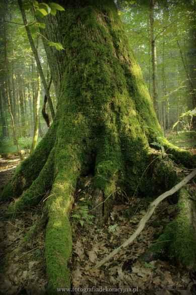 Fotoobraz z firmy Fotografia Dekoracyjna