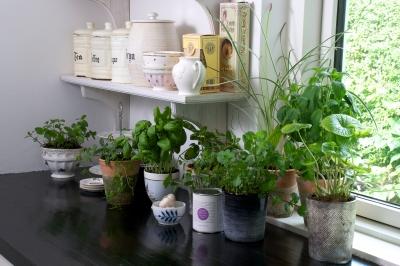 Tymianek, rozmaryn, oregano - wszystkie te rośliny na parapecie w Twojej kuchni - source: FreeDigitalPhotos.net By BrianHolm