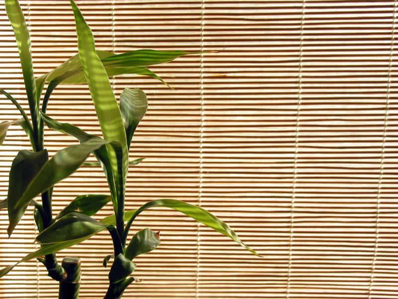 Rolety bambusowe - rodzaje, ceny, opinie, producenci