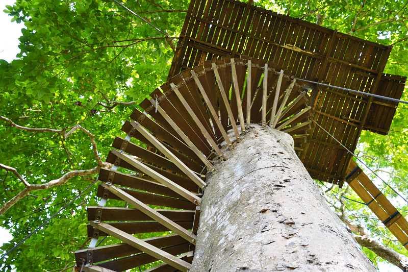 Dom na drzewie z wygodnymi schodami