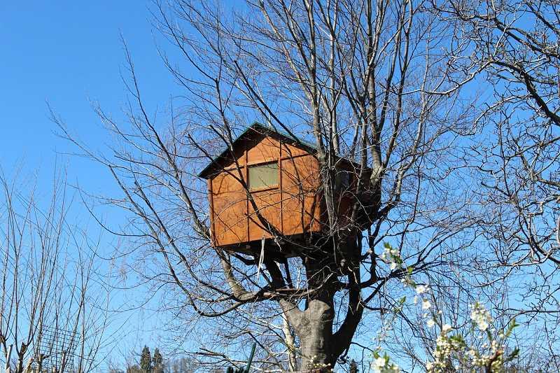 Dom na drzewie widziane z większej odległości