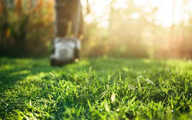 Jaka trawa na trawnik? 3 podstawowe rodzaje traw!