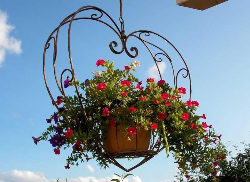 Aranżacja kwiatowa w wiszącej doniczce na balkonie