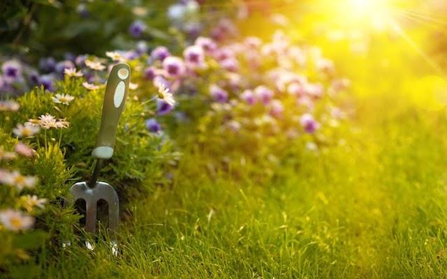 Najlepsze kwiaty ogrodowe dla Ciebie - co warto sadzić?