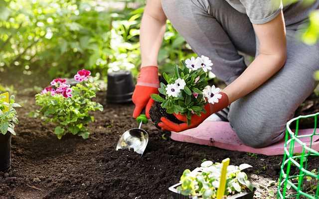 7 porad jak urządzić ogród