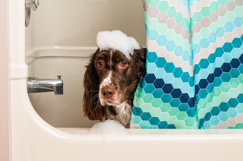 Pies w wannie z pianą na głowie