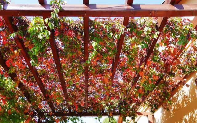 Pergole ogrodowe - rodzaje, ceny, opinie, polecane modele