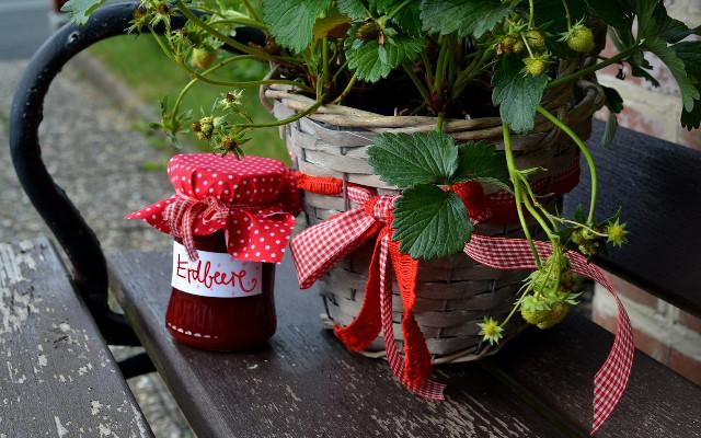 Uprawa truskawek i poziomek w pojemnikach