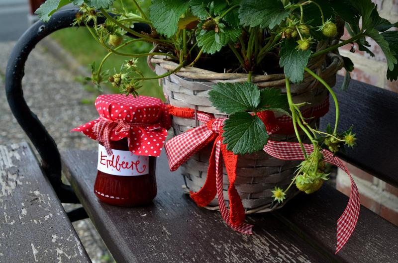 uprawa truskawek i poziomek