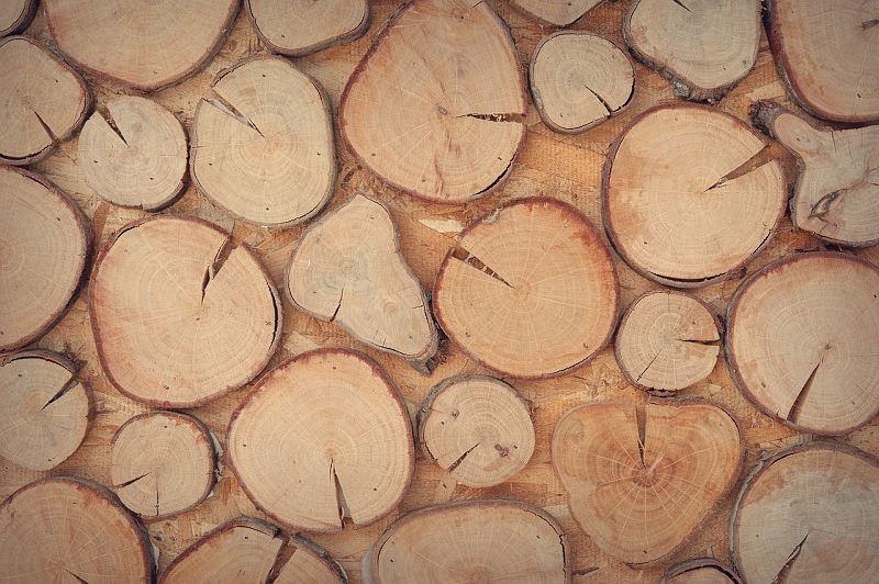 Wybory z drewna