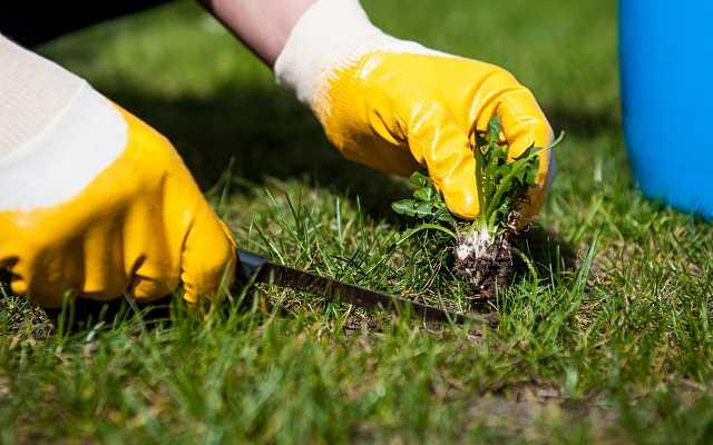 Zakładanie i pielęgnacja trawników - poradnik krok po kroku
