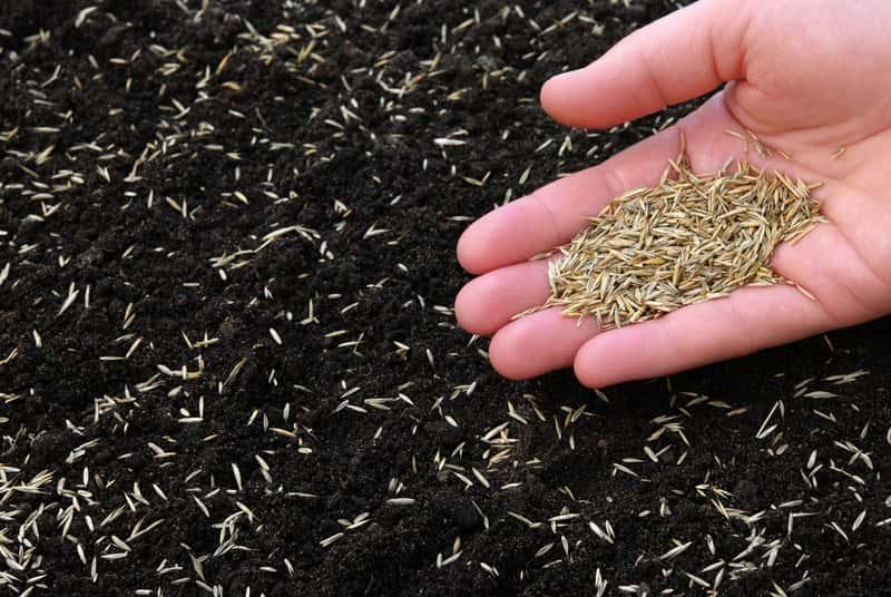 Zakładanie trawników poprzew wysiew trawy bezpośedno do gruntu. Jedna z odpowiedzi na pytanie, jak założyć trawnik
