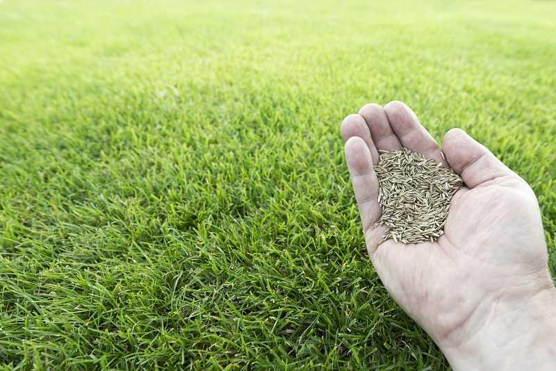 Cennik zakładania i pielęgnacji trawnika jest bardzo zróżnicowany. Zakładanie trawnika to jednorazowy koszt, ale pielęgnacja jest płacona abonamentowa.