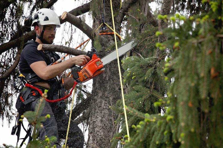 Wycinka drzew powinna być zawsze poprzedzona załatwieniem zezwolenia na działanie tego typu. Wycinanie dużych drzew na własnej działce może być mocno utrudnione.