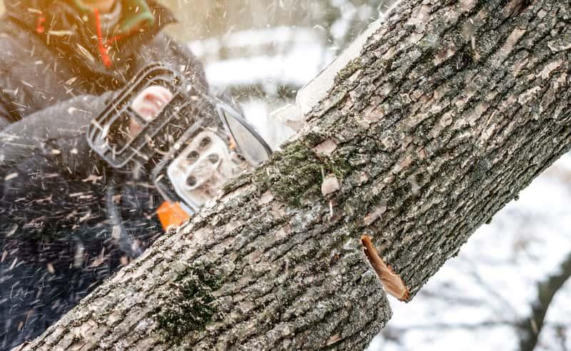 Wycinka drzew na własnej działce - koszt, formalności, przepisy prawa, zastosowanie i najważniejsze informacje