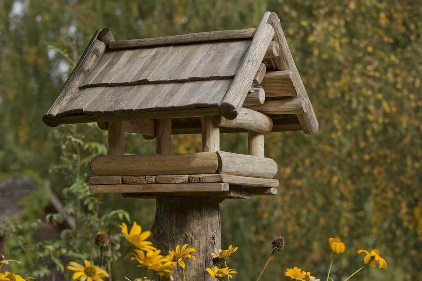 Drewniany karmnik dla ptaków w lesie, a także informacje, jak zrobić karmnik dla ptaków krok po kroku