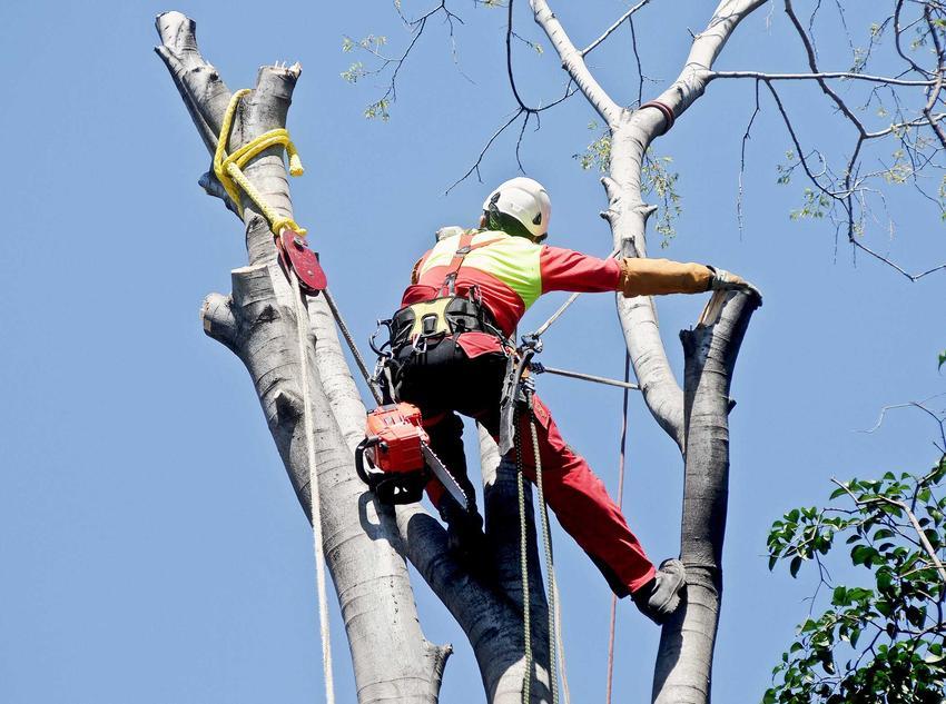 Wycinka drzew ma dość wysokie koszty. Najczęściej należy załatwić pozwolenie na wycinkę i zaangażować specjalistów w tej dziedzinie. Obsługa czytników ekranu włączona.