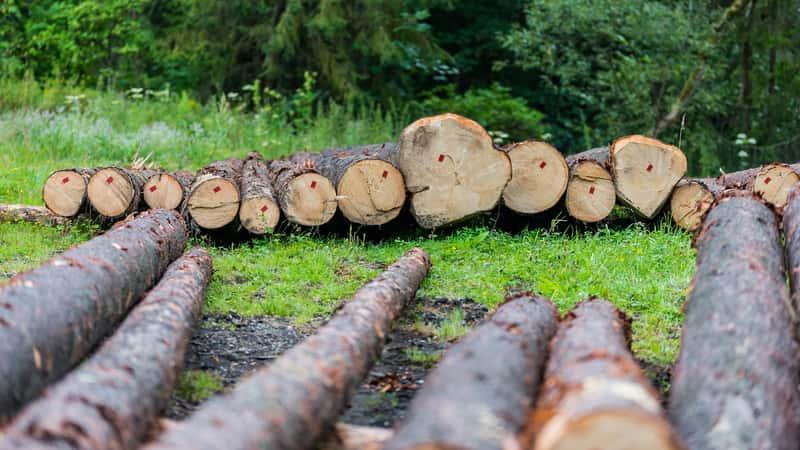 Wycinka drzew wymaga pozwolenia, na wycięcie konkretnych drzew. Wycinka drzew powinna zostać przeproadzona przez specjalistów.