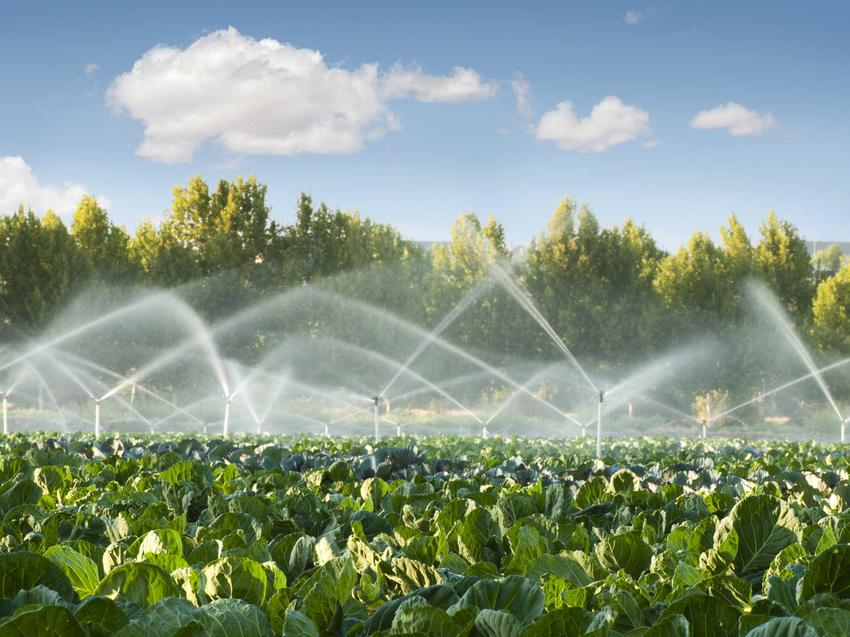 Zamontowanie systemu nawadniania ogrodu jest najlepszym rozwiązaniem. Dzięki temu podlewanie roślin może być automatyczne. Trzeba tylko dostosować projekt nawodnienia.