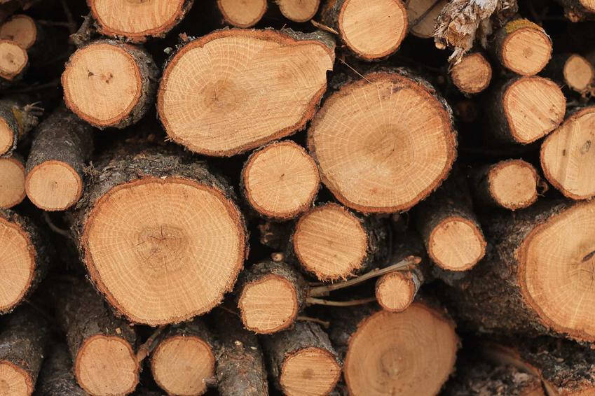 Drewno do kominka musi mieć określone właściwości. Powinno być trwałe, łatwe do podzielenia na części i dość kaloryczne.