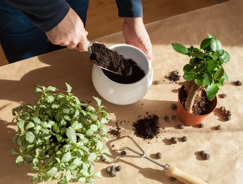 Kermazyt ogrodniczy wsypywany do doniczki, a także zastosowanie, cena, wady i zalety, przygotowane podłoża do roślin z keramzytem
