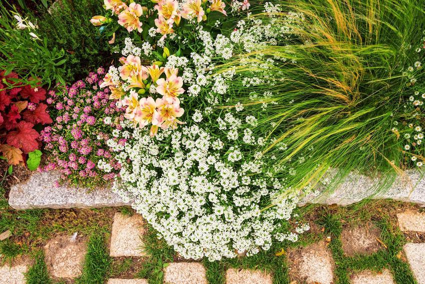 Płyty ażurowe w ogrodzie w towarzystwie kwiatów oraz porady, jak układać kostkę ażurową w ogrodzie lub na podjeździe
