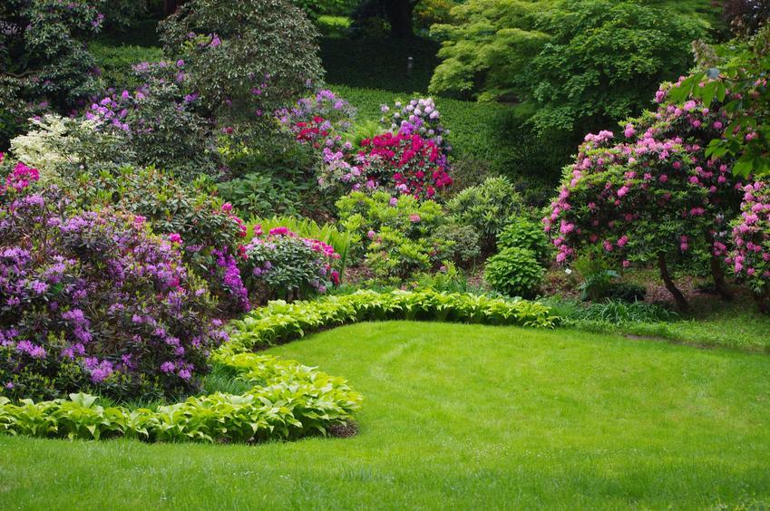 Pięknie kwitnące róże w ogrodzie oraz cennik i ceny roślin ogrodowych, w tym krzewów i roślin kwitnących oraz najlepsze gatunki do ogrodu