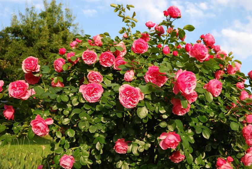 Pięknie zaaranżowany ogród z różnymi roślinami oraz ceny i cennik roślin ogrodowych, także krzewów ozdobnych i kwiatów