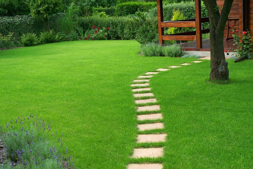 Piękny, zielony i zdrowy trawnik w przydomowym ogrodzie, czyli wertykulacja trawnika i porady dla początkujących ogrodnikach