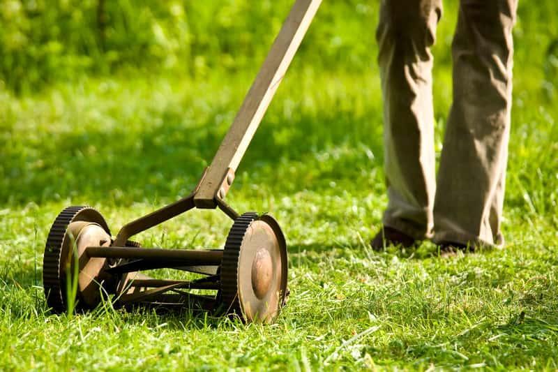 Wertykulacja trawnika przez mężczyznę przeprowadzana ręcznym narzędziem. Porady na temat areacji i wertykulowania trawnika krok po kroku