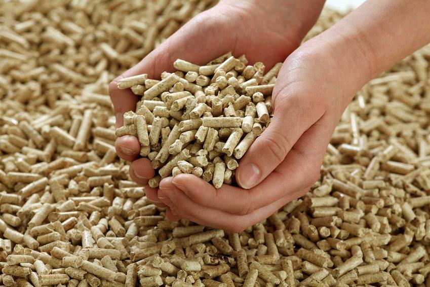 Pellet trzymany w dłoni. Ranking kotłów na pellet oraz opinie o kotłach na pellet popularnych producentów