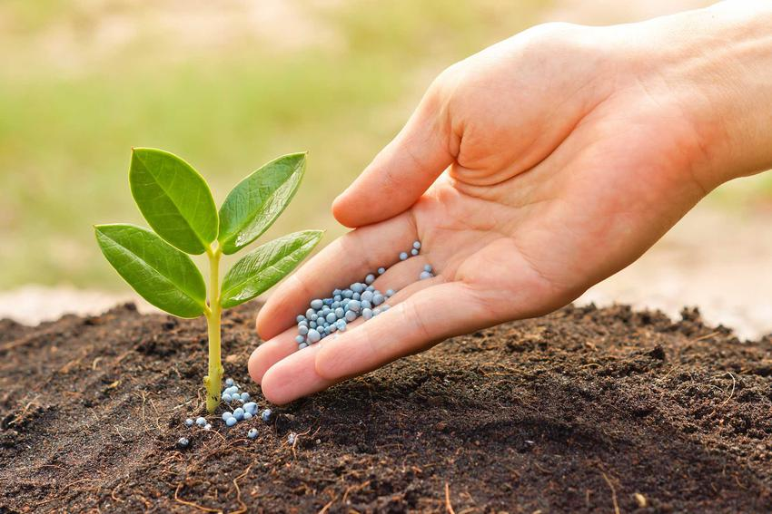 Zobacz, jakie są aktualne ceny nawozów chemicznych do nawożenia roślin ozdobnych, uprawnych i drzewek owocowych.