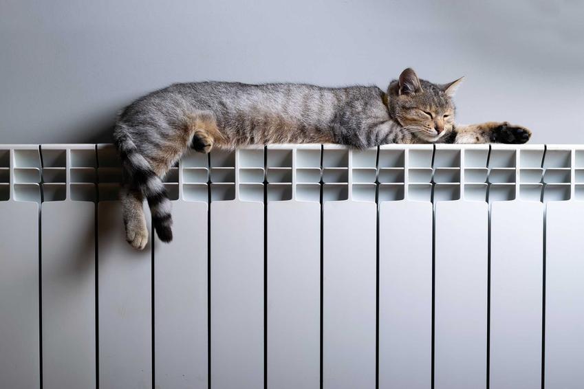 Kot na grzejniku i grzejniki aluminiowe czy też kaloryfery aluminiowe na ścianie oraz cena grzejników aluminiowych