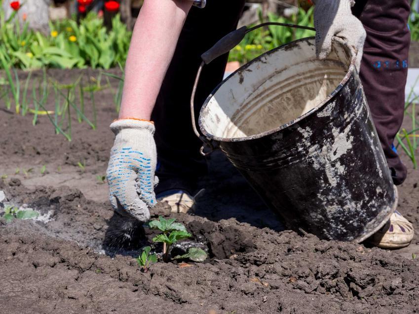Wapno węglanowe podczas nawożenia roślin jako wapno nawozowe oraz cena wapna węglowego, zastooswanie, skład, jakość i rodzaje