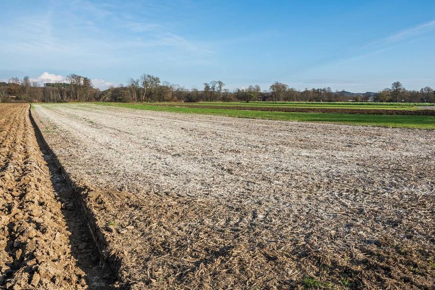 Wapno dolomitowe na polu oraz skład wapna dolomitowego i polecane wapno nawozowe do nawożenia roślin uprawnych