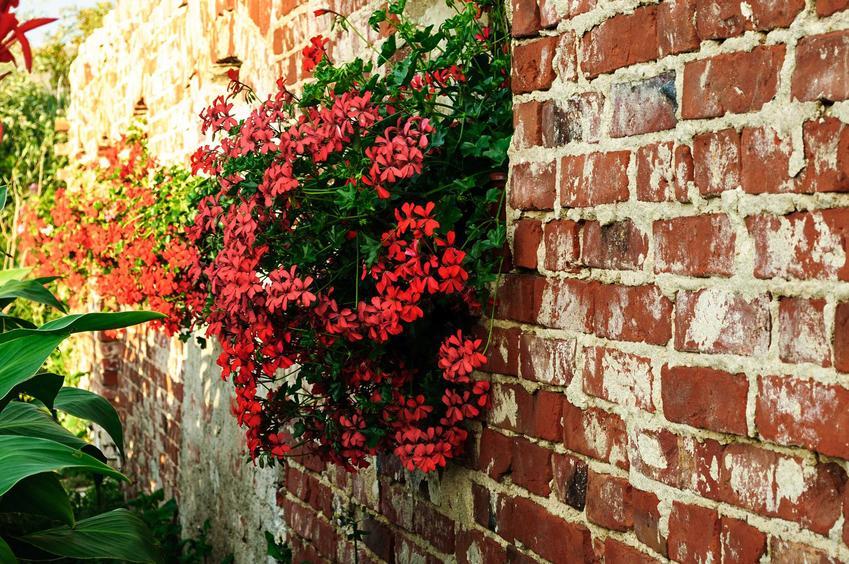 Cegła rozbiórkowa w ogrodzie, czyli czerwona cegła rozbiórkowa oraz jej cena i opinie, zastosowanie oraz wady i zalety