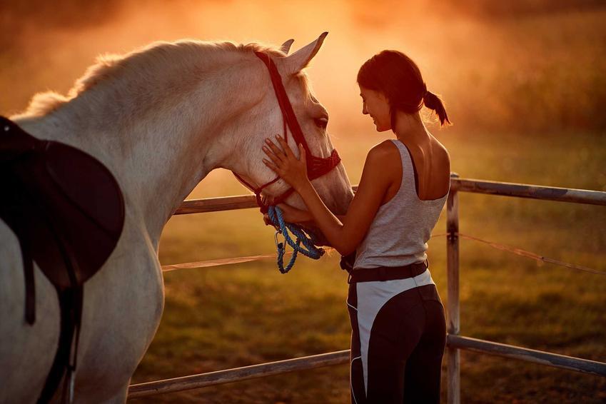 Cennik nauki jazdy konnej w Polsce, czyli ile kosztuje jazda na koniu, pojedyncze lekcje w różnych częściach kraju