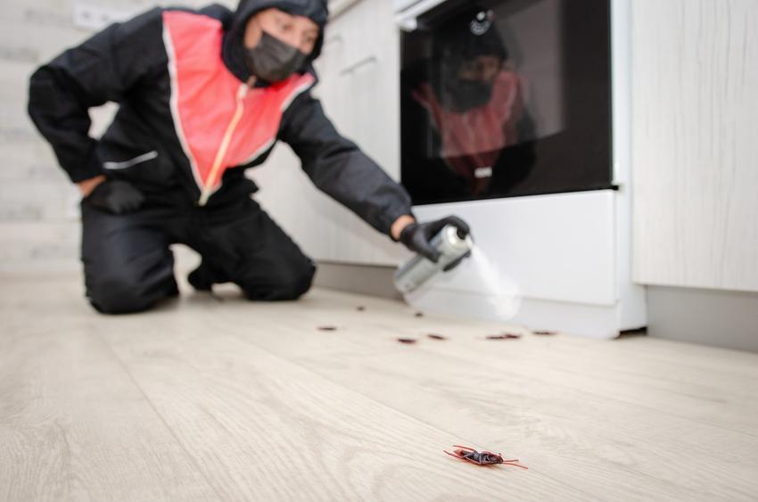 Pluskwy i dezynsekcja mieszkania, czyli pluskwy w domu i pluskwy w mieszkaniu oraz ich zwalczanie