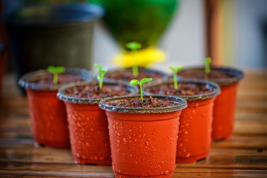 Sklep ogrodniczy donice i osłonki - największy wybór na rynku