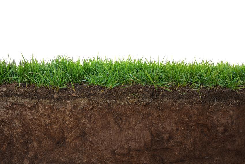 Przekrojowy obraz ziemi i trawnika, a także najlepsza ziemia pod trawnik