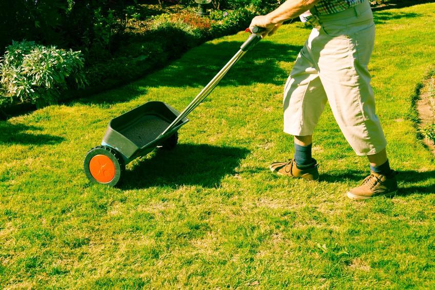 Mężczyzna podczas nawożenia trawnika, a także czym nawozić trawnik