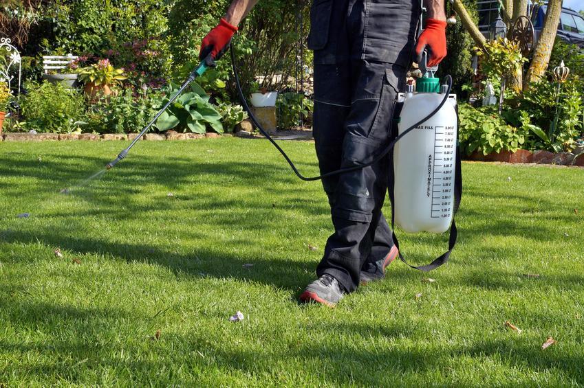 Nawożenie trawnika przez mężczyznę za pomocą spryskiwacza oraz nawóz do trawnika
