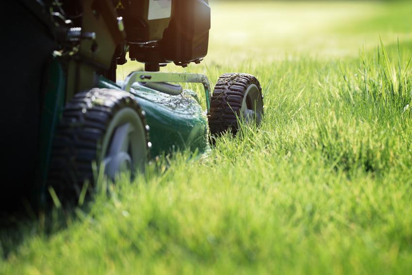 Kosiarka podczas pracy przy koszeniu trawy w ogrodzie oraz wysokość koszenia trawy