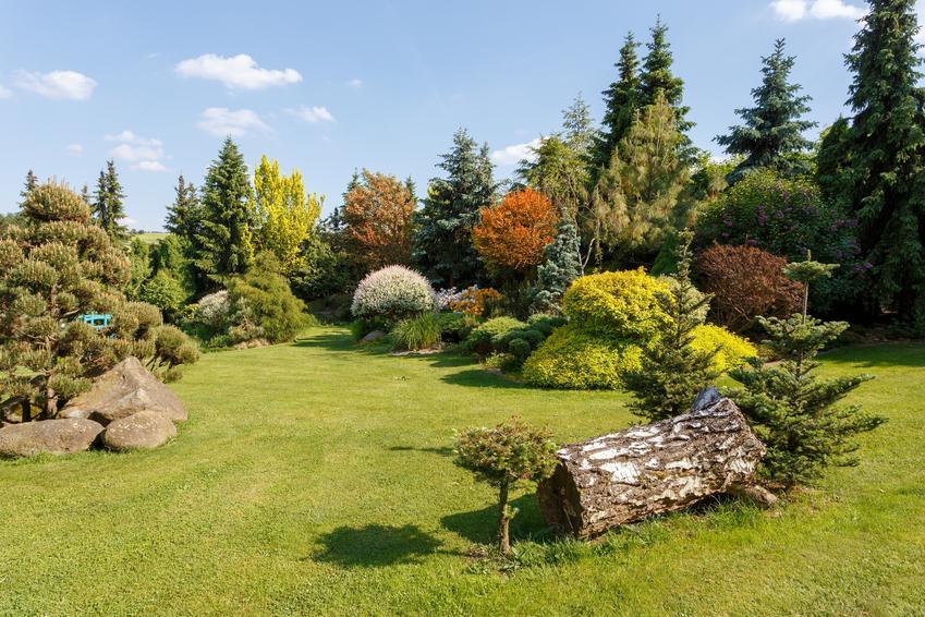 Iglaki rosnące w ogrodzie przydomowym, a także porady, jak wybrać nawóz do iglaków