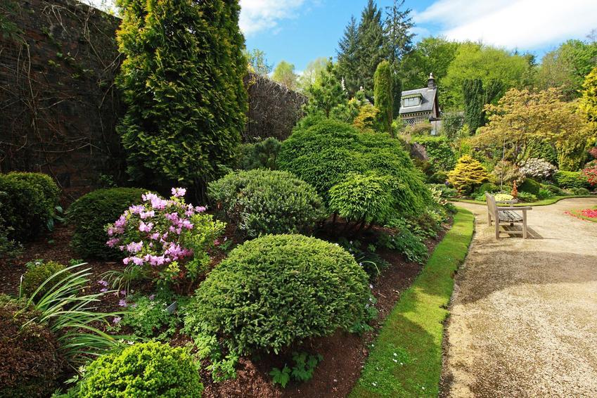 Różnej wielkości krzewy iglaste w ogrodzie, a także nawóz do iglaków i nawożenie iglaków
