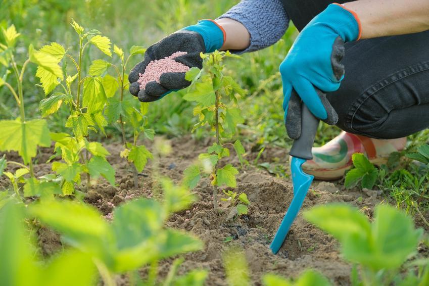Nawożenie roślin w ogrodzie, a także nawozy potasowe, ich zastowanie i cena