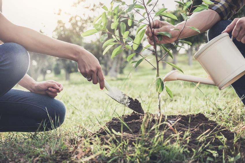 Nawożenie posadzonego drzewka, czyli produkty i nawozy Substral do pielęgnacji roślin