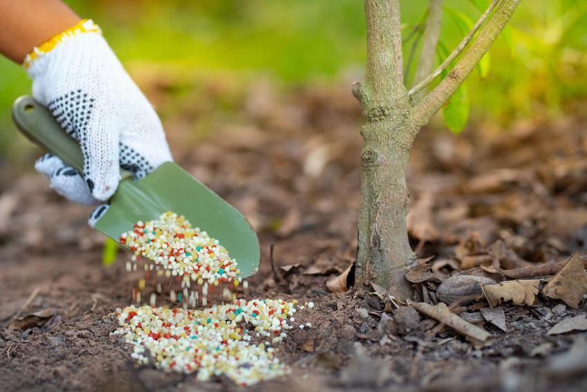 Nawożenie roślin w ogrodzie, a także produkty i nawozy Substral krok po kroku