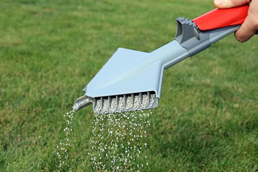 Wapnowanie trawnika, czyli odkwaszanie trawnika za pomocą wapna krok po kroku