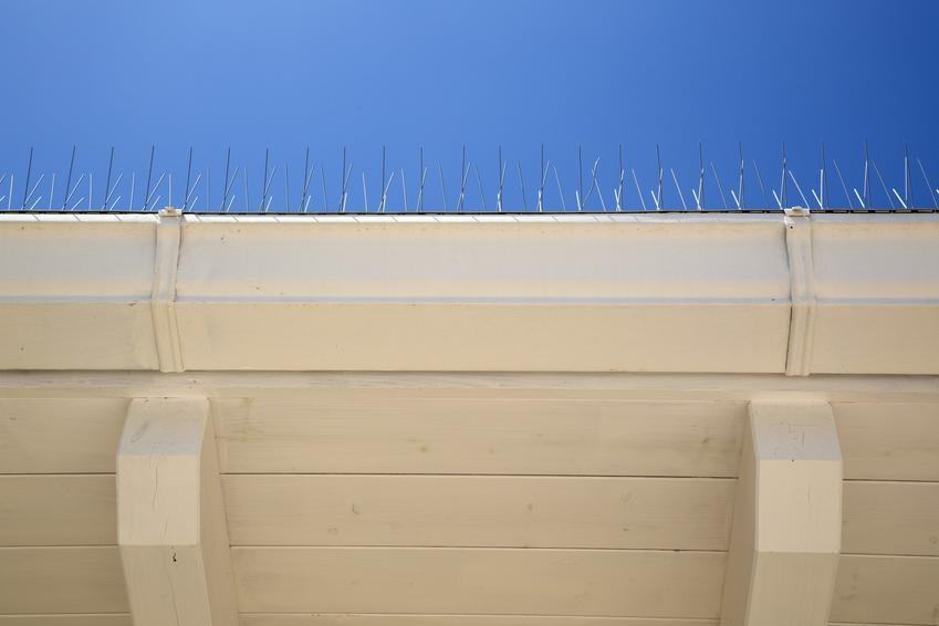 Gwoździe wbite na krawędzi dachu, czyli jak wykonać odstraszanie ptaków